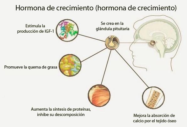 Hormonas de crecimiento del pene